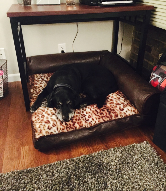 bolstered dog beds kirkland with bolster bed memory costco foam